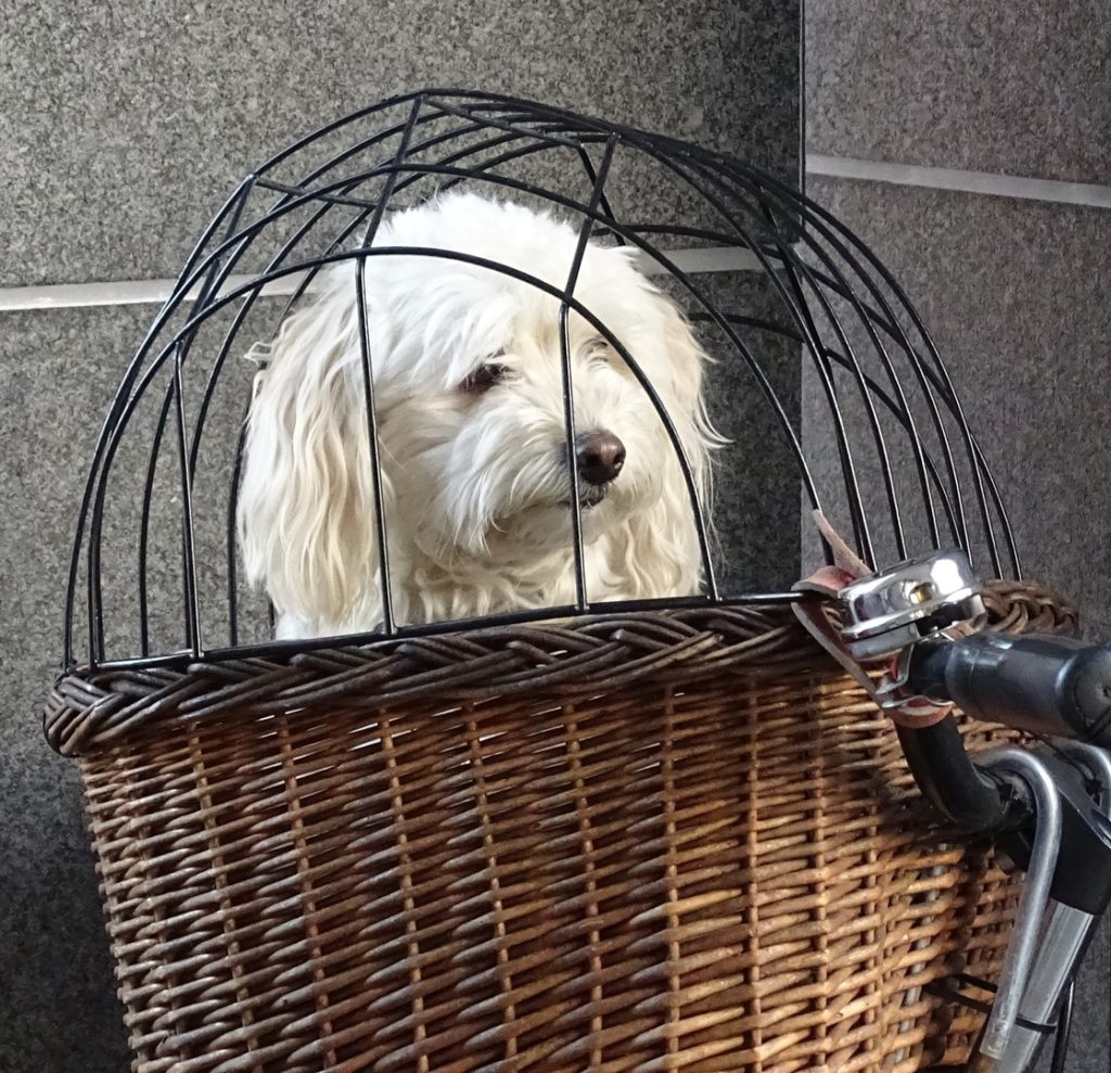 Crate Training A Puppy All You Need To Know My Pet Casa